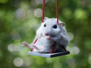15+ Adorable Hamsters That Will Cause A Cuteness Overload ...