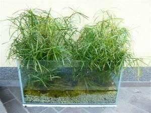 Aquarium Dekorieren Ideen : ein altes aquarium eine m glichkeit wasserpflanzen f r den garten oder auf die terasse ~ Bigdaddyawards.com Haus und Dekorationen