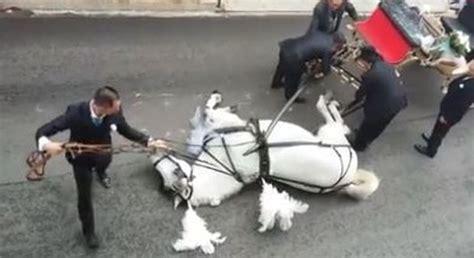 carrozza sposi il cavallo traina la carrozza degli sposi poi stramazza