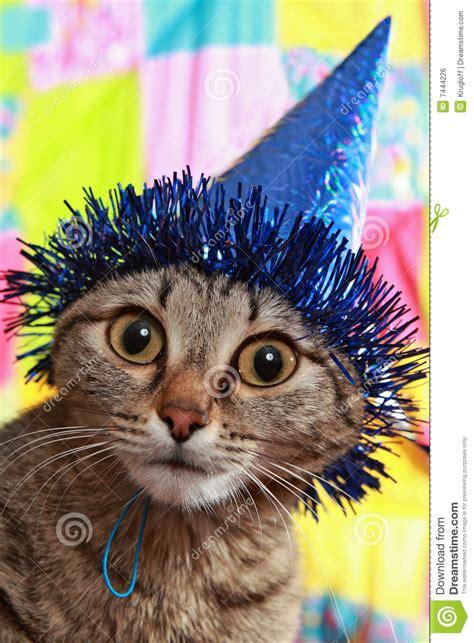 stupid cat royalty  stock image image
