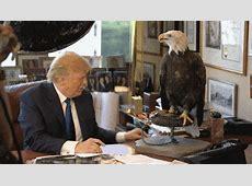 Donald Trump Trump 2016
