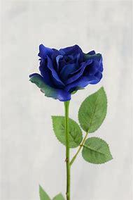 Blue Rose Flowers