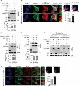 Huntingtin promotes mTORC1 signaling in the pathogenesis ...
