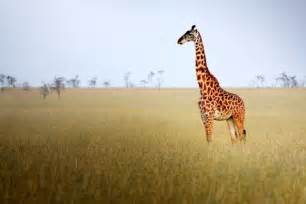 Grassland Biome Animals