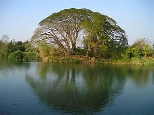 Baum Am Wasser : kostenloses foto laos baum wasser reflexion ~ A.2002-acura-tl-radio.info Haus und Dekorationen