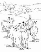 Coloring Horse Pages Printable Herd Breyer Sheets Foal Adult Crafts Colouring Animal Jumping Activities Horses Adults Word Drawings Spirit Books sketch template