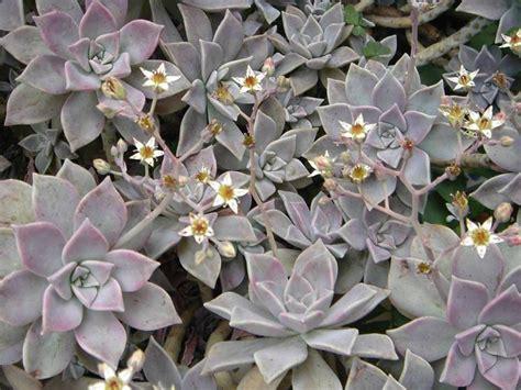 piante bellissime da giardino piante invernali da esterno piante da giardino piante