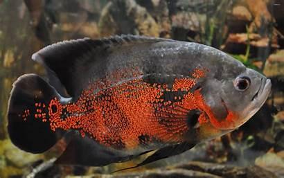 Oscar Wallpapers Fish