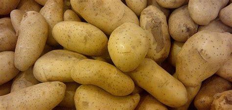 horrific tales  potatoes  caused mass sickness