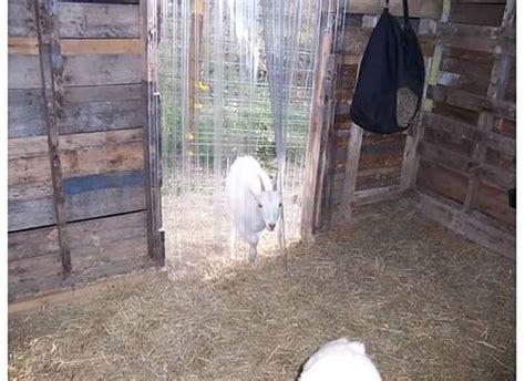 pet door flaps and door curtains