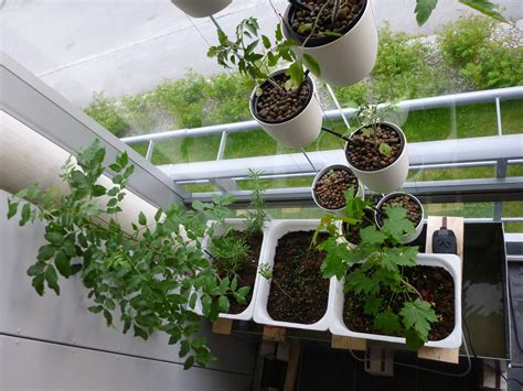 Hydroponic Gardening by Hydroponic Gardening Part 1 An Overview
