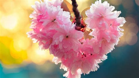 spring nature wallpaper  images