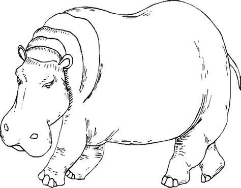Galería de imágenes: Dibujos de hipopótamos para colorear