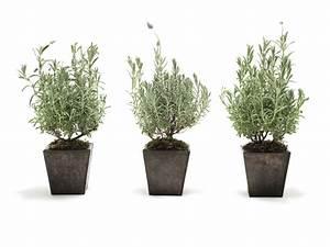 Lavendel Vermehren Wasserglas : lavendel ber ableger vermehren so geht 39 s ~ Lizthompson.info Haus und Dekorationen