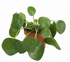 Künstliche Grünpflanzen Echt Aussehen : gl ckstaler dehner ~ Buech-reservation.com Haus und Dekorationen