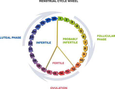 Tips For Tracking Your Ovulation Cycle