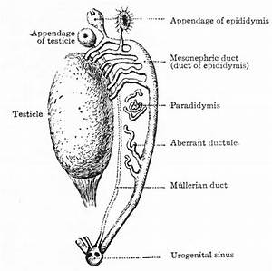 Book - Text-book Of Embryology 15