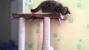 Arbre à Chat Fait Maison : elessar sur son arbre chat fait maison youtube ~ Melissatoandfro.com Idées de Décoration