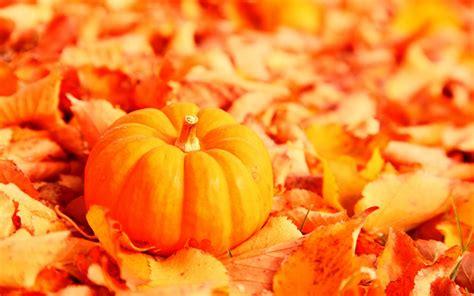 autumn pumpkin background mobile wallpapers