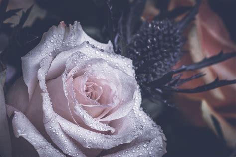 images blossom water drop flower petal pink