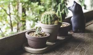 Comment Entretenir Un Cactus : comment faire pousser et entretenir un cactus a little ~ Nature-et-papiers.com Idées de Décoration
