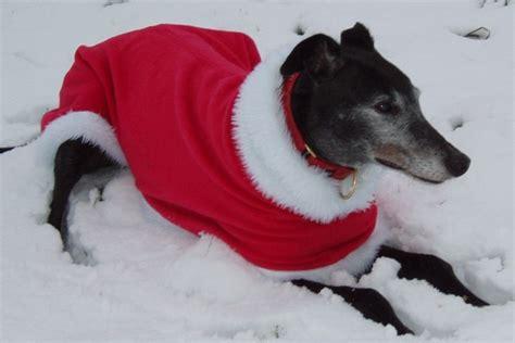 milgi coats beautiful fleece coats raincoats walking  coats  greyhound coats