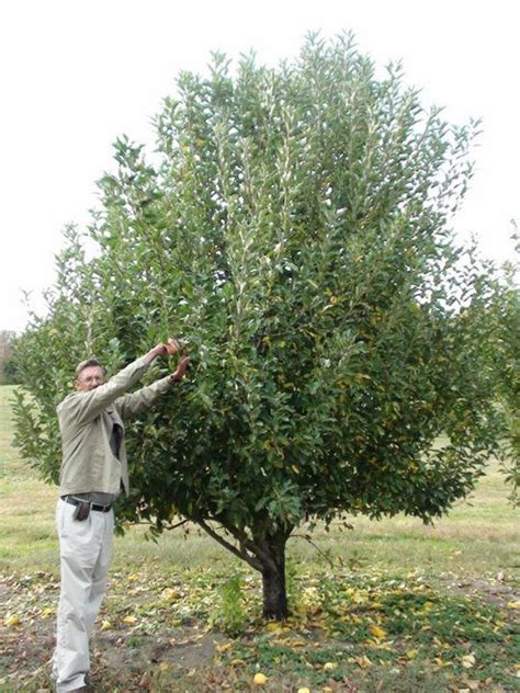 bearing tree fruit tree blooming and bearing problems and how to solve them stark bro s blog fruit trees