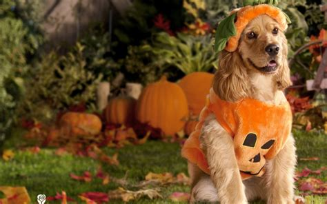 Animal Thanksgiving Wallpaper - pets wallpaper 60 images