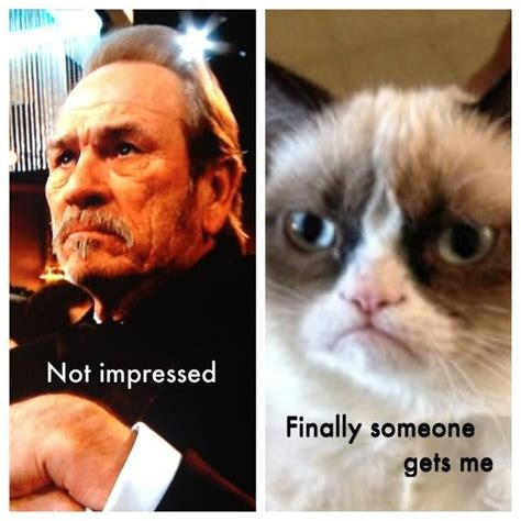 Tommy Lee Jones Meme - grumpy cat tommy lee jones cats grumpy cat pinterest i love grumpy cat and cat sayings