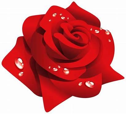 Rose Clipart Dew Transparent Background Clip Rosas
