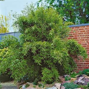Sichtschutz Garten Bambus : sichtschutz bambus jumbo die neueste innovation der innenarchitektur und m bel ~ Sanjose-hotels-ca.com Haus und Dekorationen