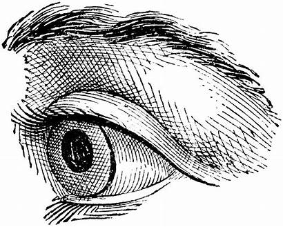 Eye Clipart Drawing Line Quoom Realistic Eyeball