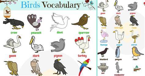 bird names list  birds   birds images avec