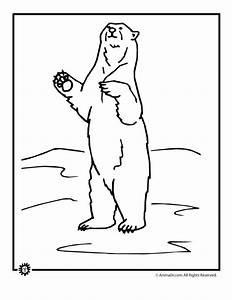 Polar Bear clipart draw a - Pencil and in color polar bear ...