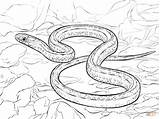 Snake Coloring Pages Garter Printable Serpent Snakes Python Drawing Sea Realistic Plains Corn Clipart Colorings Beast Adults Getdrawings Viper Getcoloringpages sketch template