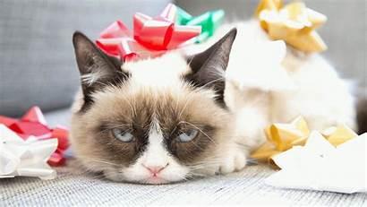 Cat Grumpy Christmas Wallpapers Meme Memes Cats