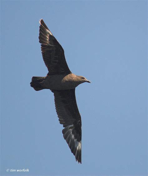 pelagic birding trip report sept 5 9 2011 bajawhale com