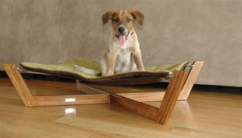 adorable dog hammock project top wood plans