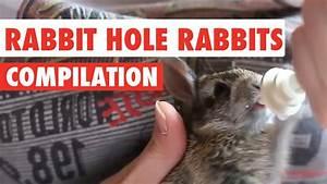 Rabbit Hole Rabbits Video Compilation 2017