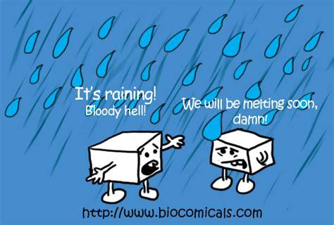 "Biocomicals High In Sugar ""damn!it's Raining!"""