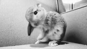 bunny gif 9   funny gifs,gif