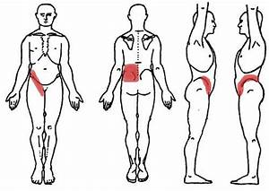 Diagram Showing Kidney Pain Can Be Felt In The Lower Back