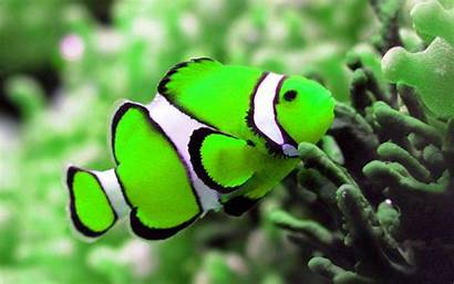 Wallpapers Fishes