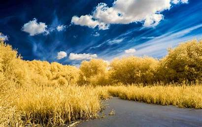 Cloud Yellow Tree Wallpapers Nature Backgrounds Background
