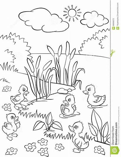 Grass Lake Five Ducklings Swim Coloring Pages