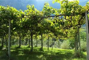Pergola Mit Wein Bepflanzen : die pergola gestaltungselement im gartenbau aus der klassischen antike ~ Eleganceandgraceweddings.com Haus und Dekorationen