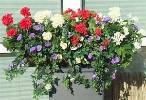 Gräser Für Balkonkasten : balkonpflanzen winterhart pflegeleicht ~ Michelbontemps.com Haus und Dekorationen