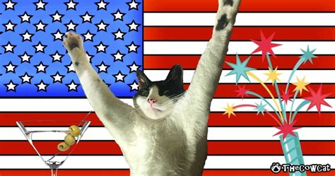 celebrate fourth of july with how to celebrate the 4th of july with your cat the cow cat