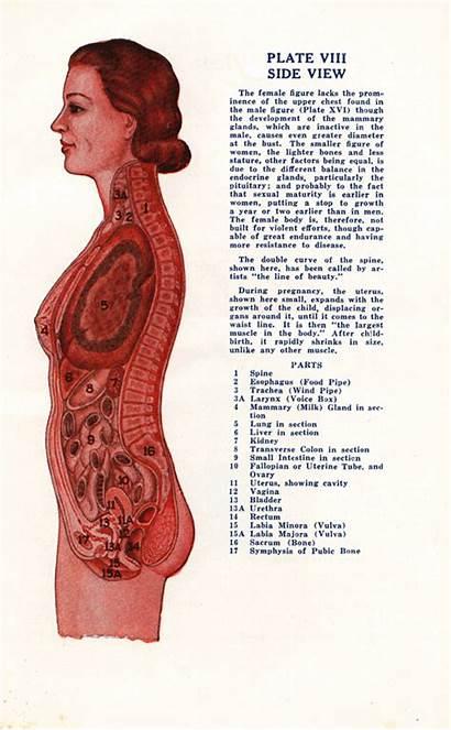 Female Male Gifs Animated Anatomical Human Retro
