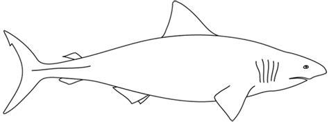 coloriage requin les beaux dessins de animaux  imprimer
